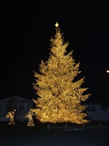 2003-Tree